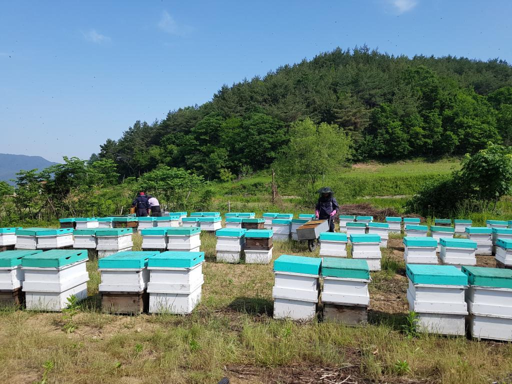꿀벌들의합창