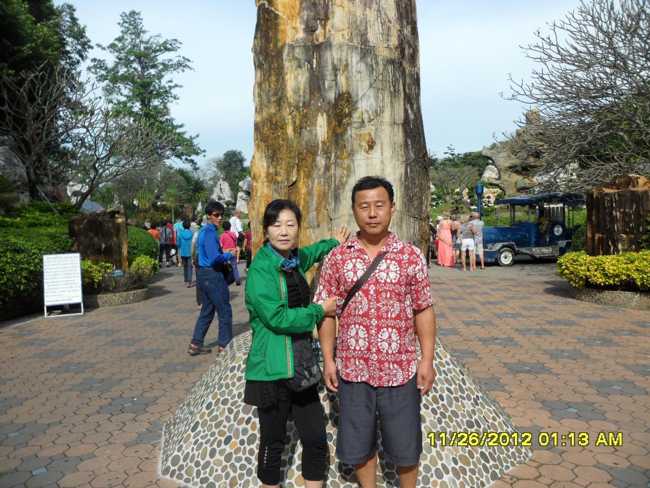 나무가 돌로된화석
