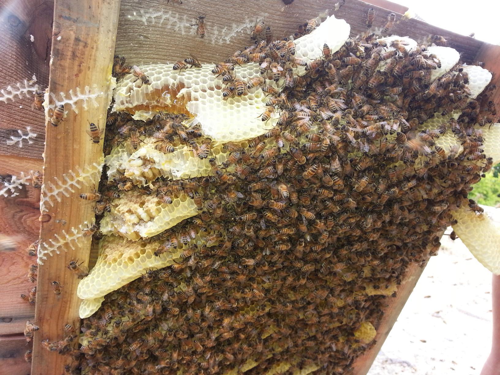 벌통 밑에 꿀벌들이 가득