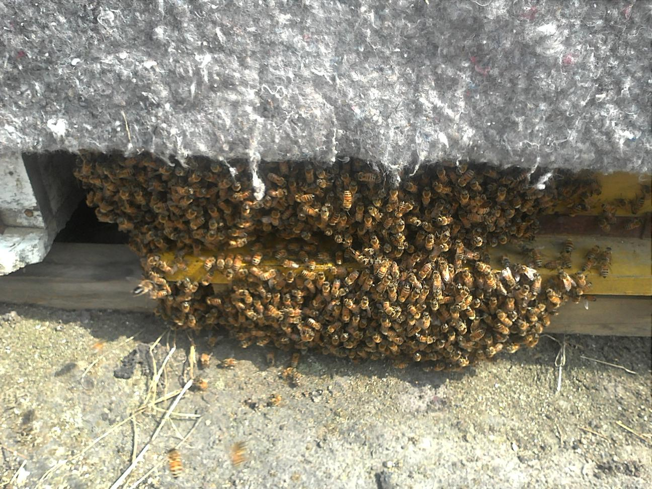 봄날 더워서 벌들이 가득나왔네요